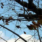 【マンション管理士 おさらぎブログ】意外と知らない植栽の重要性