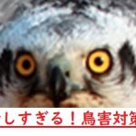 【マンション管理用語集(ち)】鳥害対策はたかがタカ!?