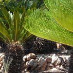 【新人マンション管理士レポート】マンションの理事になった人のための植栽管理入門(1回目)