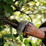 【団地マンションの植栽管理を担う東邦レオのスタッフコラム 2】ついでに切っておいてね。