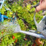 【団地マンションの植栽管理を担う東邦レオのスタッフコラム 3】え?水やりってやり方があるの?