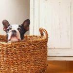 【シングルママ・ムージのマンション管理組合理事長の日記】ペット禁止の意味は?